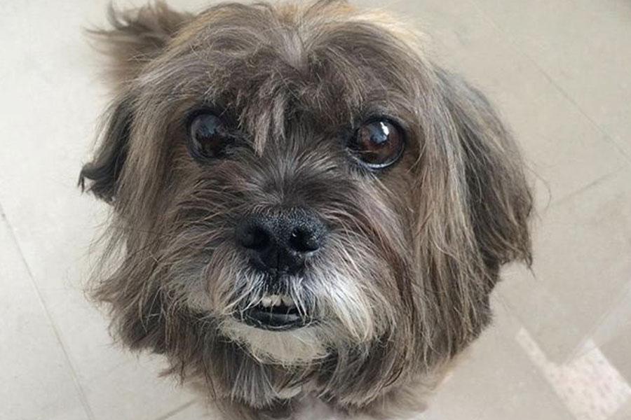 Vista de cima de cachorro com alzheimer