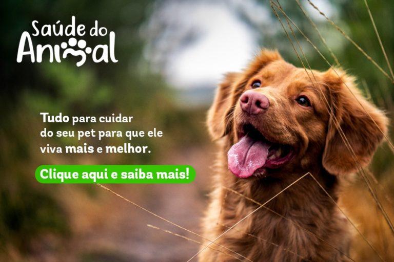 Cachorro feliz e curioso em foco com o fundo desfocado e os dizeres saúde do animal tudo para cuidar do seu pet para que ele viva mais e melhor. Clique aqui e saiba mais!