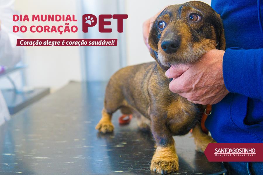 Cachorro em bancada de veterinário sendo amparado pelo médico